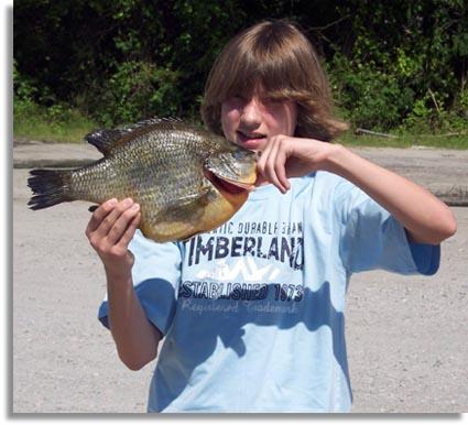Seo north carolina state record redear sunfish for Freshwater fishing in north carolina