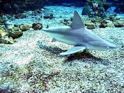 Southeastern outdoors sand shark sand shark publicscrutiny Image collections