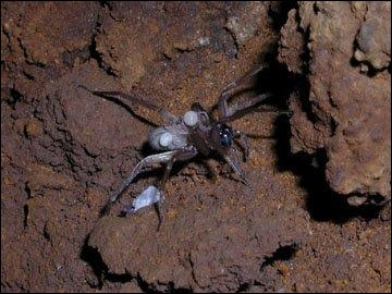kauai cave wolf spiders 2 Maui's Makena Beach and Golf Resort has a variety of new food options. but ...