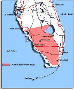 Southeastern Outdoors Florida Panther